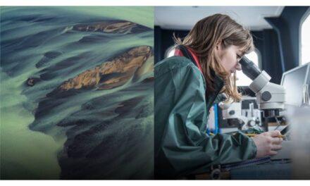 Ericsson Innovation Awards 2020: taking on climate change