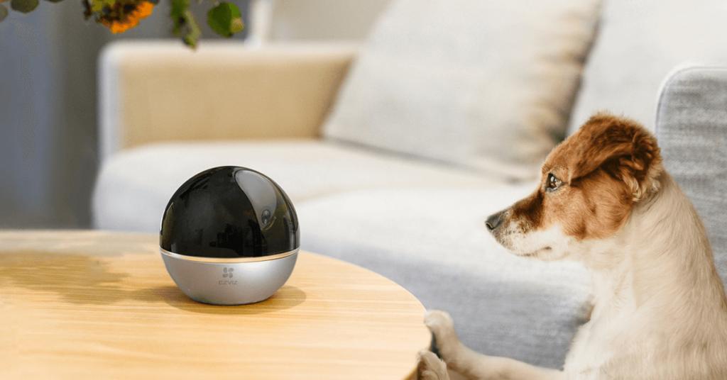 EZVIZ C6W pan and tilt indoor camera with pet